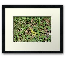 """Helicopters"" Framed Print"