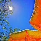 Summer Sun ! by Nancy Richard