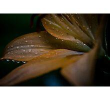 Summer Night's Rain Photographic Print
