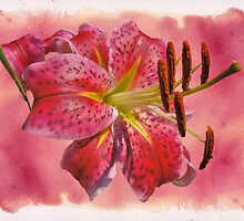 Garden Delight - Stargazer Lily by MotherNature2