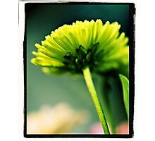 Green Flower Photographic Print