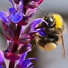 Bumble Bee by wraysburyade