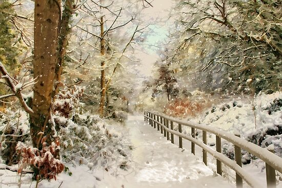Winter delight by Lyn Evans