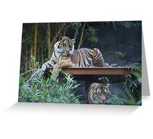 Tigers at Taronga Zoo in Sydney Australia Greeting Card