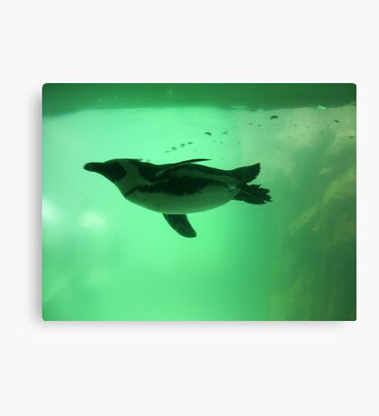 Penguin Swim Canvas Print
