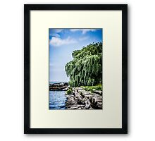 Shining Willow Framed Print