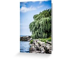 Shining Willow Greeting Card