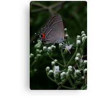 Little Gray Moth Canvas Print
