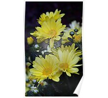 Plastic Wrapped Daisies Poster