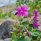 Dwarf Fireweed by Yukondick