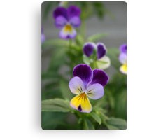 Don't Call Us Pansies Canvas Print