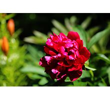 Pretty flower Photographic Print