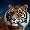 Big Cats - (Canon EOS images only)