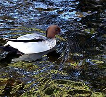 Duck in the water by LeJour