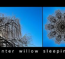 Winter Willow Sleeping by fantasytripp