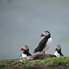 Puffin by James1980