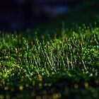 moss by tonysphotospot