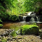 Garell Glen, Kilsyth, Scotland by Jim Wilson