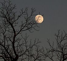 Reaching for the Moon by Karen Harrison