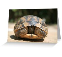 Young Spur Thighed Tortoise Looking Out of Its Shell Greeting Card