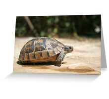 Sideview of A Walking Turkish Tortoise Greeting Card