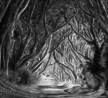 The Dark Hedges by Gary Rudisill by garyrudisill