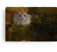 Ragdoll cat-Inky Dinky Canvas Print