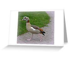 Egyptian Goose. Greeting Card