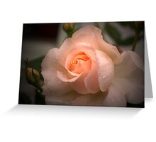Pink Rose in the Rain Greeting Card