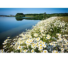 Daisies by the water Photographic Print