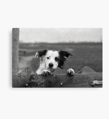 Guarding the fence Canvas Print