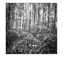 Dream forest Photographic Print