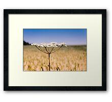 Cow Parsley Framed Print