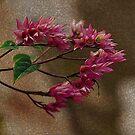 Pink Flowers by mrfriendly