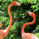 Columbus, OH: Flamingos by ACImaging
