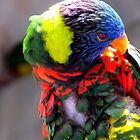 Columbus, OH: Preening Lorikeet by ACImaging