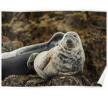 Farne Islands Seal Poster