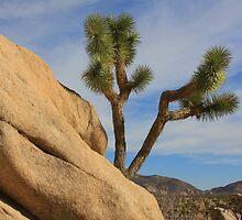Joshua Tree National Monument by CarolM