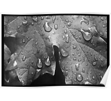 Black and White Leaf with Raindrops Poster