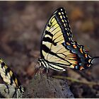 Butterfly Nature Insect Bug Wings by Emily Heatherly
