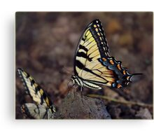 Butterfly Nature Insect Bug Wings Canvas Print
