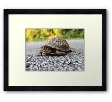 Mr. Turtle Reptile Framed Print