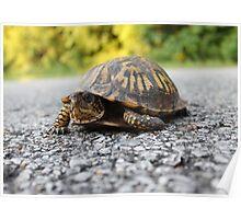 Mr. Turtle Reptile Poster