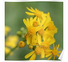 Yellow Flowers Daisies Poster