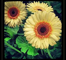 Yellow and Orange Flowers by Emily Heatherly