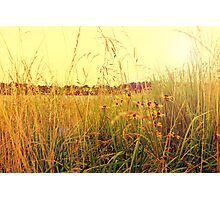 Golden Lake Flowers Photographic Print