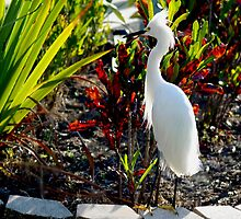 Egret in the planter by ♥⊱ B. Randi Bailey