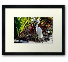Egret in the planter Framed Print