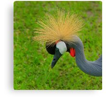 African Crowned Crane Canvas Print