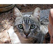 Friend Tiger Photographic Print